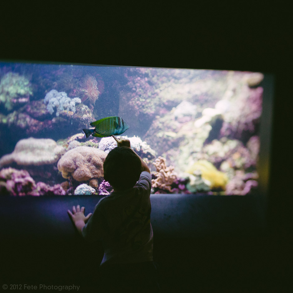 Child looking at fish