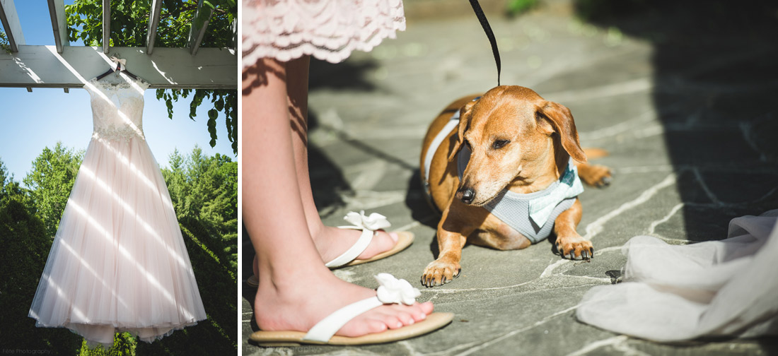 04-dog-wearing-tux