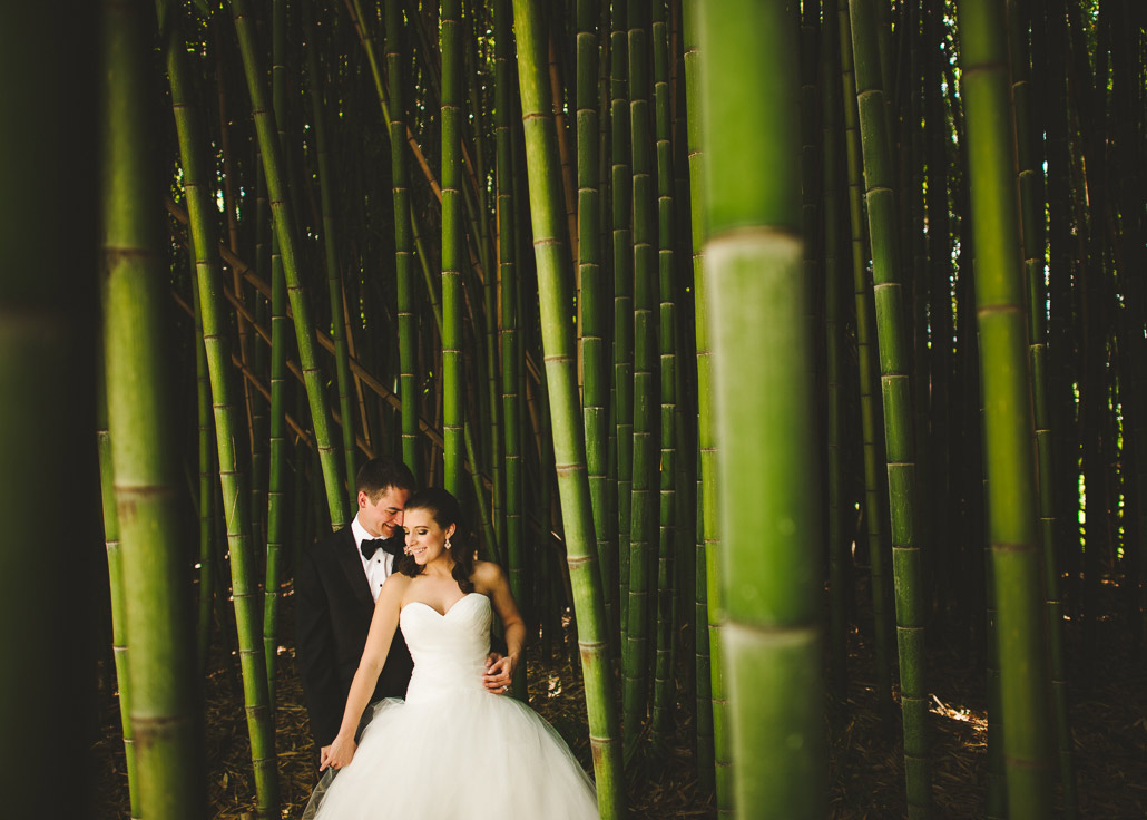 Biltmore bamboo photo